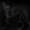 Pietro Bologna - Animalerie, cane