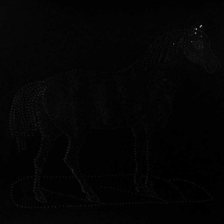 cavallo-copia